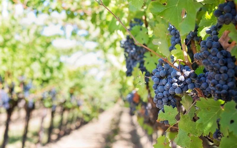 Gute Weine kommen nicht nur aus Deutschland, Frankreich oder Italien